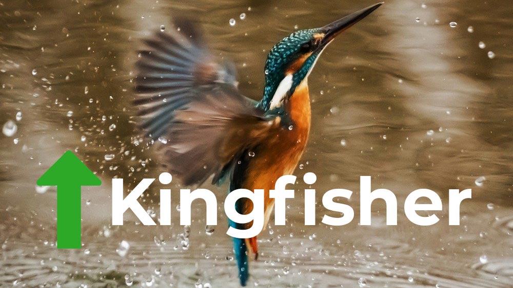 Kingfisher bird in flight